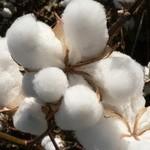 pure cotton bed Linen